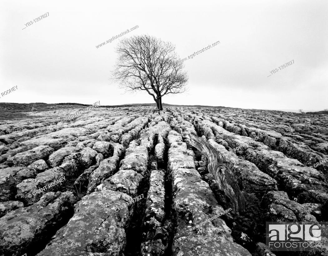 Stock Photo: Limestone Pavement, Malham, Yorkshire Dales, England.