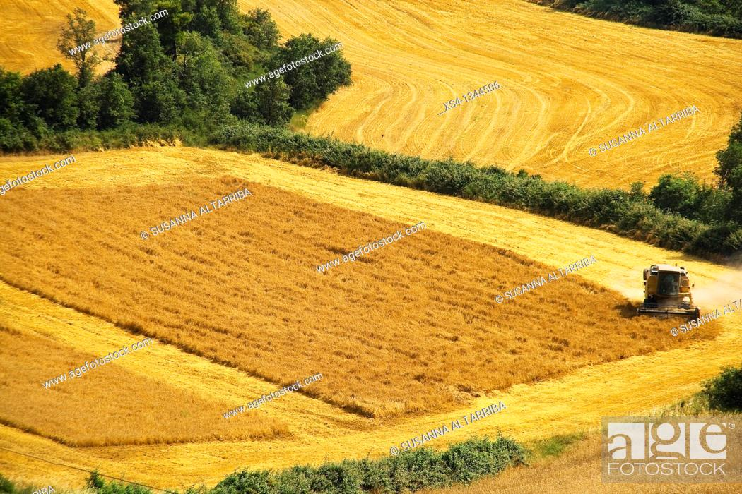 Stock Photo: Harvest of corn at view of eagle, photo taken in Solsonès, Lleida, Catalonia, Spain, Europe.