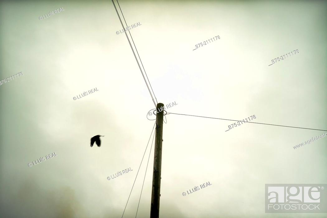 Stock Photo: A telecommunications post with cables and a bird flying arround. Yorkshire Dales, England, UK, Europe.