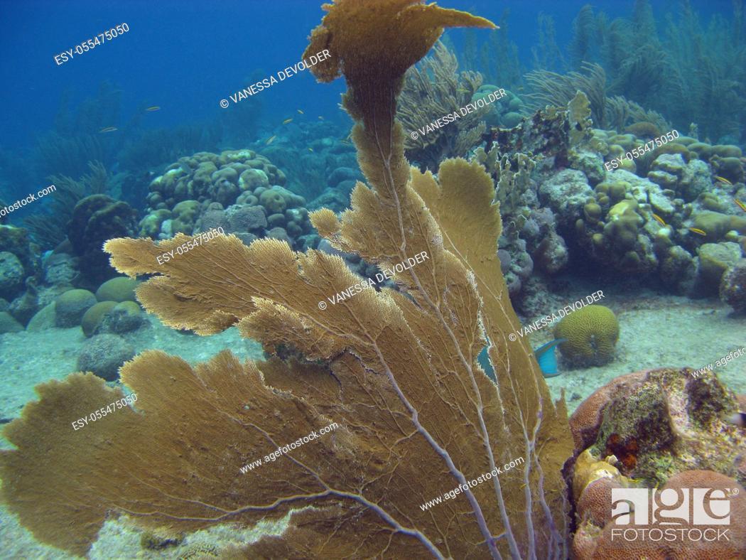 Imagen: Gorgonians under water in the Caribbean sea around Bonaire, Netherland Antilles.