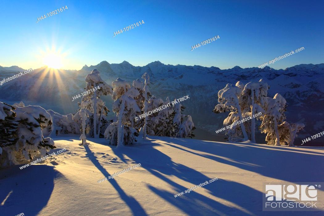 Stock Photo: Alps, Alpine panorama, rising, stairs, view, tree, mountain, mountains, mountain, mountain panorama, Bern, Bernese Alps, Bernese Oberland, trees, 3-stars, Eiger.