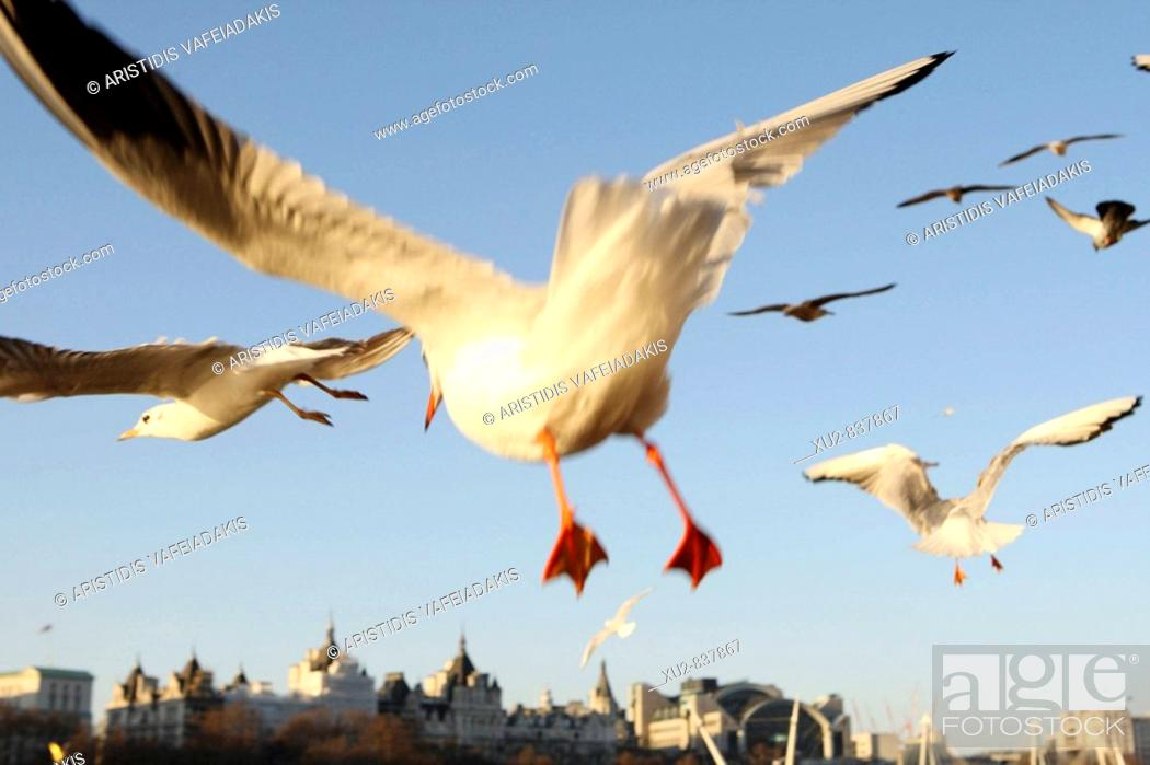Stock Photo: Seagulls fly on Thames river London England.