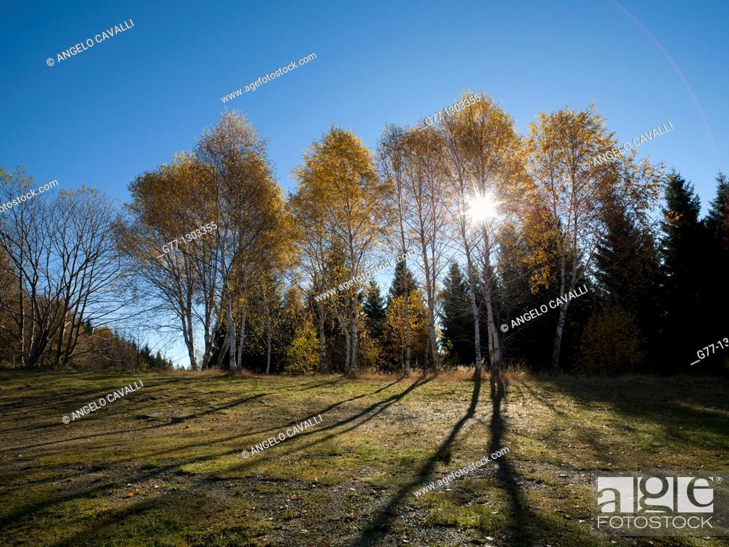 Photo de stock: Autumn in Italian Alps, Stresa, Lake Maggiore, Piedmont, Italy.
