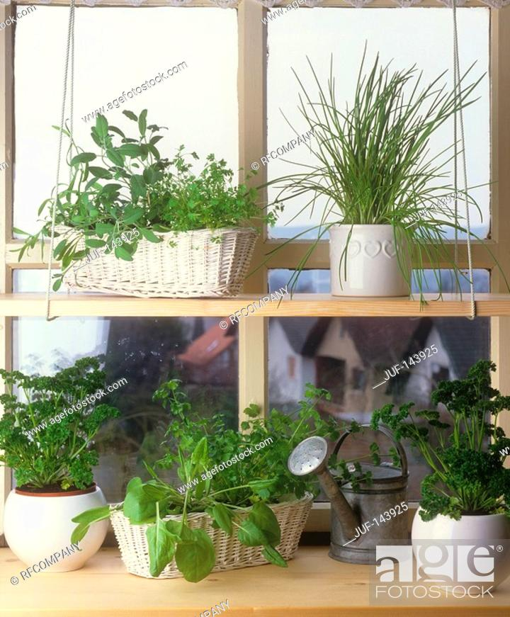Stock Photo: different herbs.
