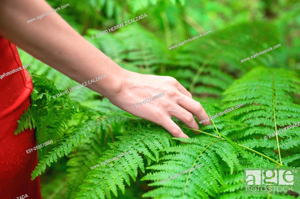 Stock Photo: Female hand, with long graceful fingers gently touches the plant, leaves of fern. Close-up shot of unrecognizable person. . High quality photo.