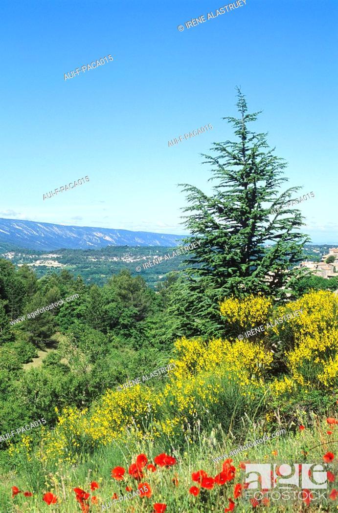 Stock Photo: Vaucluse - Haute Provence - Luberon - Bonnieux.