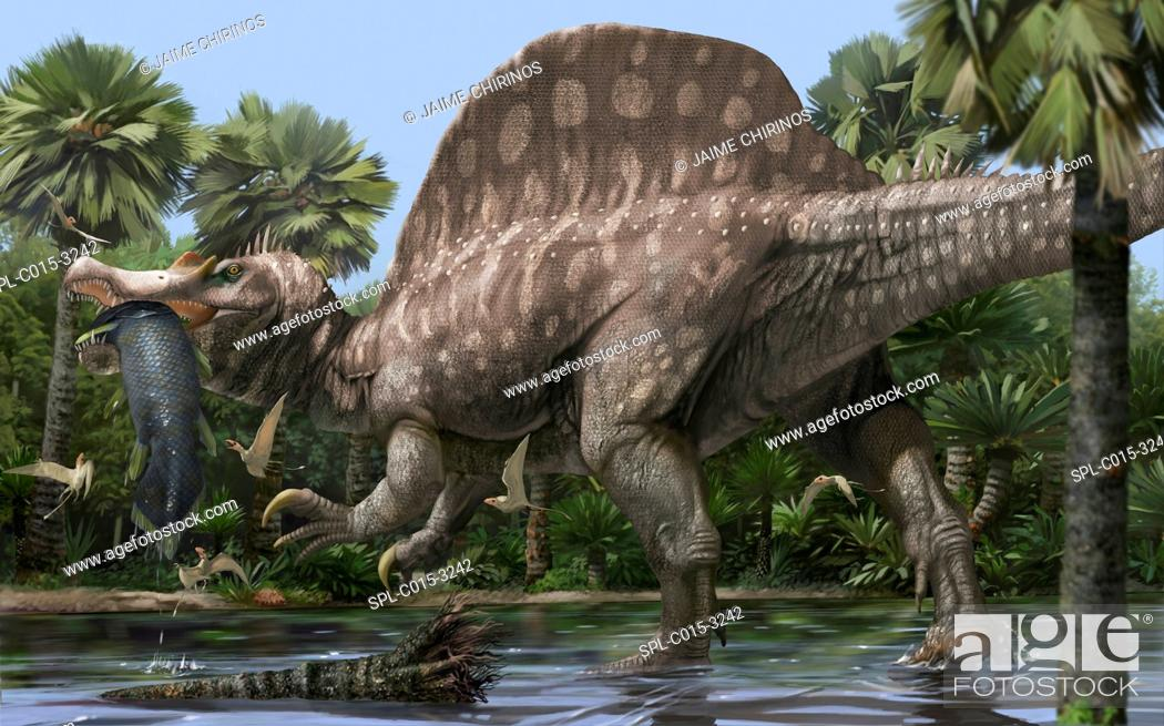 Stock Photo: Spinosaurus (Spinosaurus aegyptiacus), artwork. Spinosaurus was a large theropod dinosaur that lived 155 million years ago.
