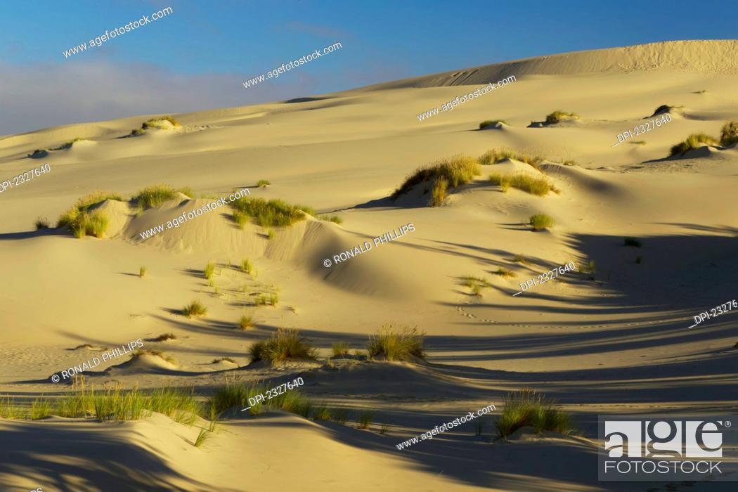 Stock Photo: Umpqua dunes in the oregon dunes national recreation area;Oregon united states of america.
