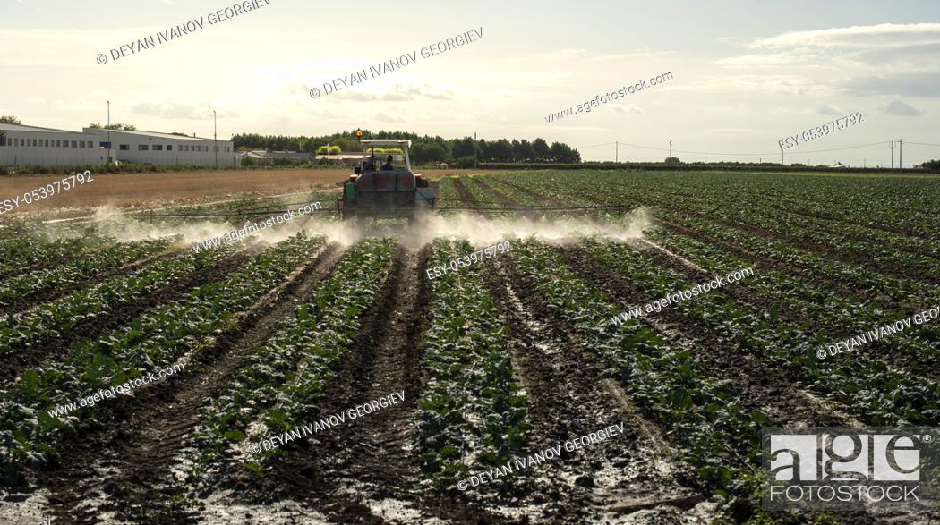 Stock Photo: An agricultural tractor sprays plants with chemicals. Protection of plants by using pesticides. Sunset on the field.