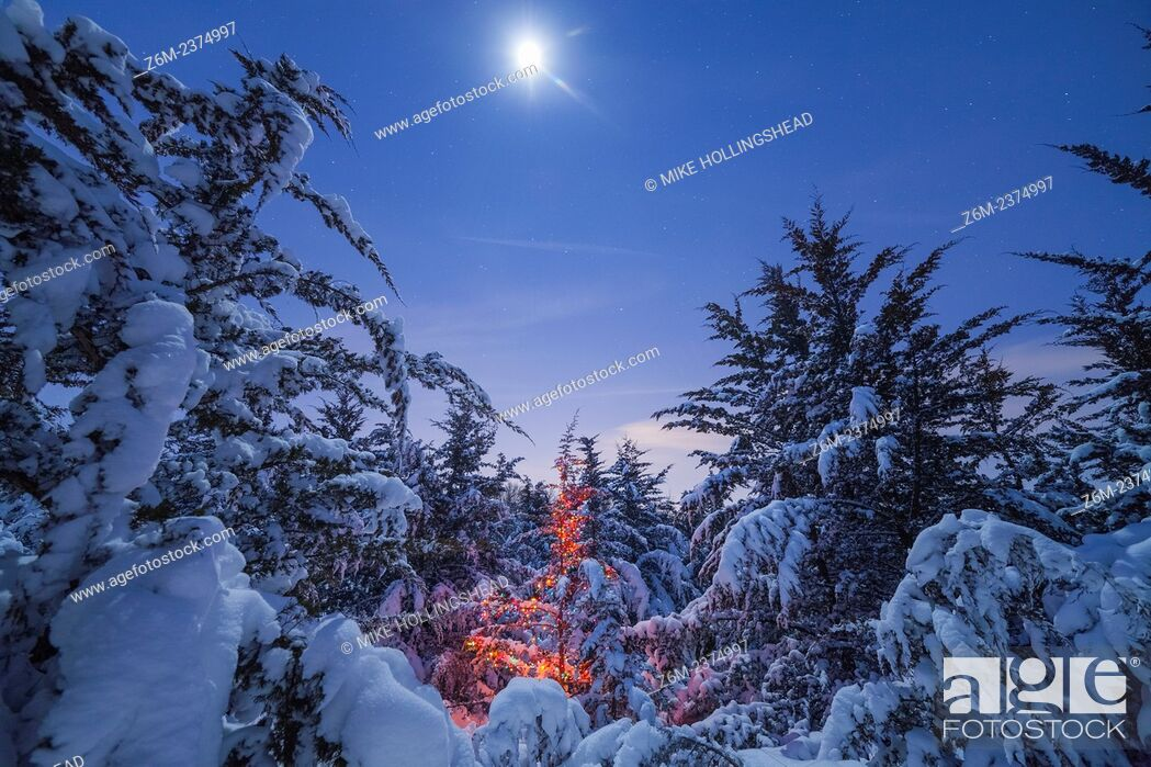 Stock Photo: Moonlight illuminates snow covered trees and a Christmas tree in Nebraska.
