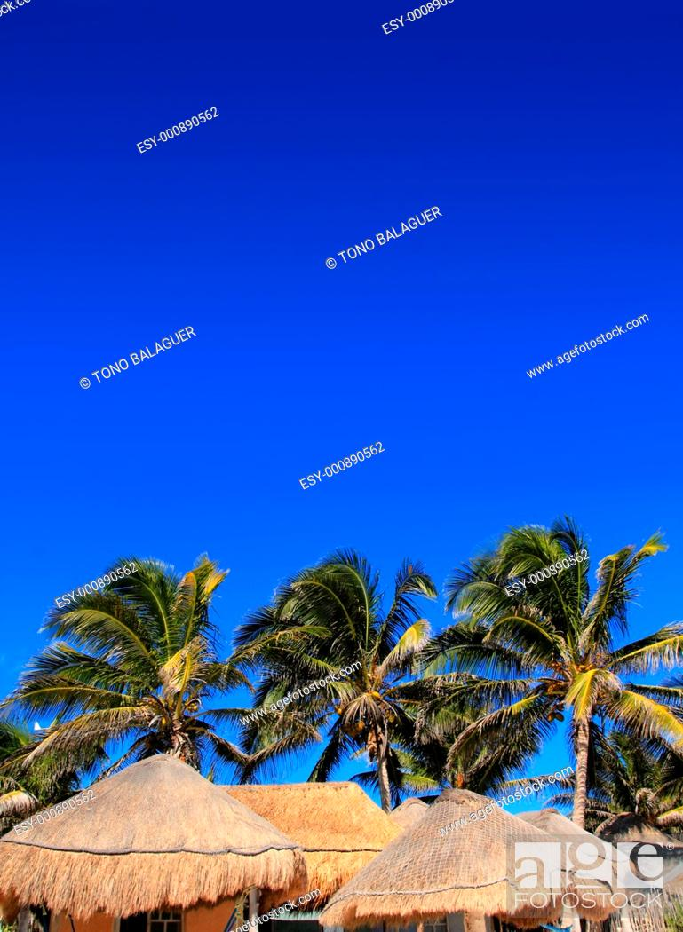 Stock Photo: coconut palm tree blue sky with hut palapa sun roof.