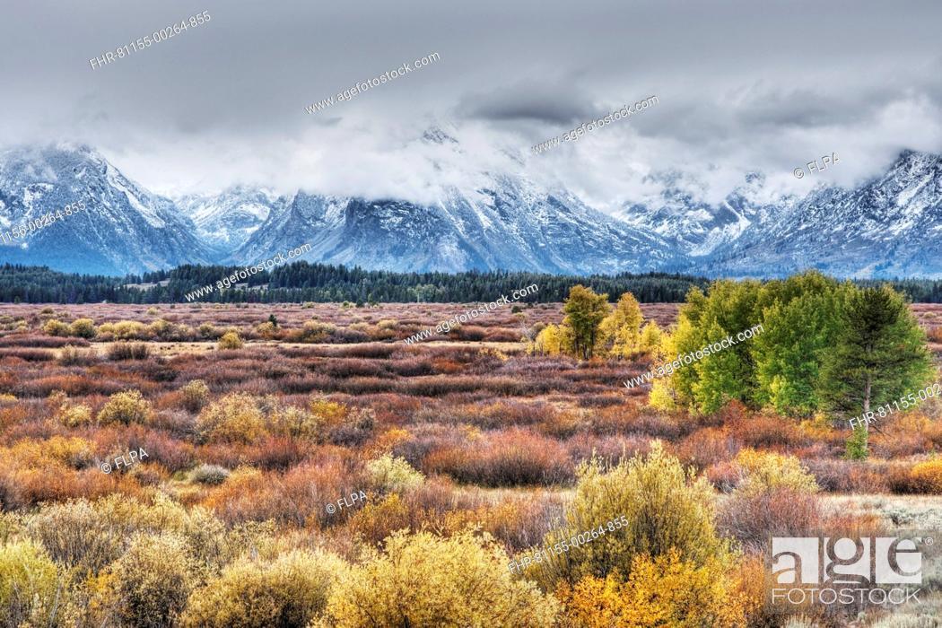 Stock Photo: View of mountain range and trees in autumn colour, Grand Teton N.P., Wyoming, U.S.A., September.