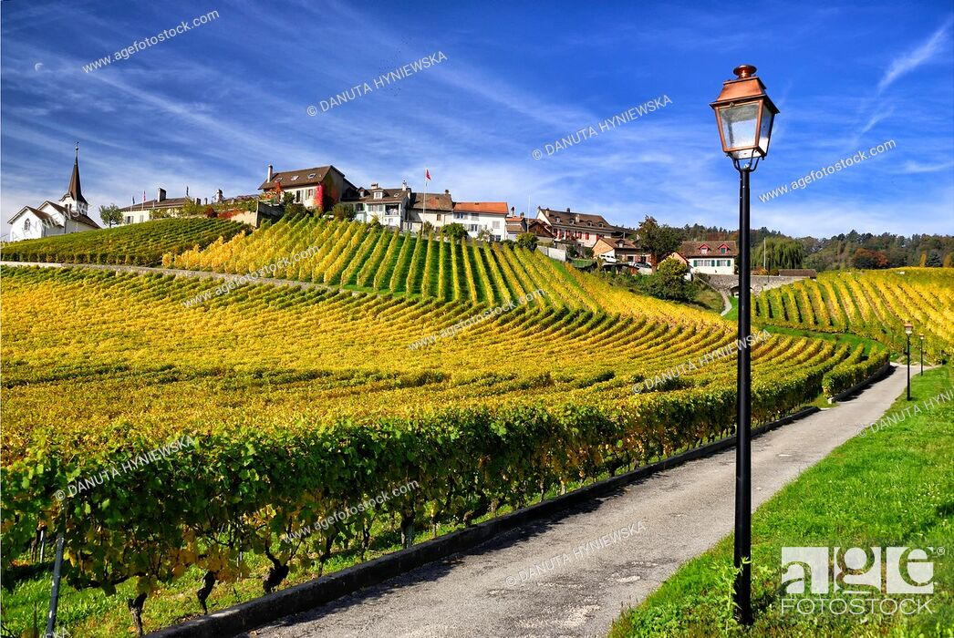 Imagen: Europe, Switzerland, Canton Vaud, La Côte, Morges district, Fechy, elegant lanterns along paths in vineyards.