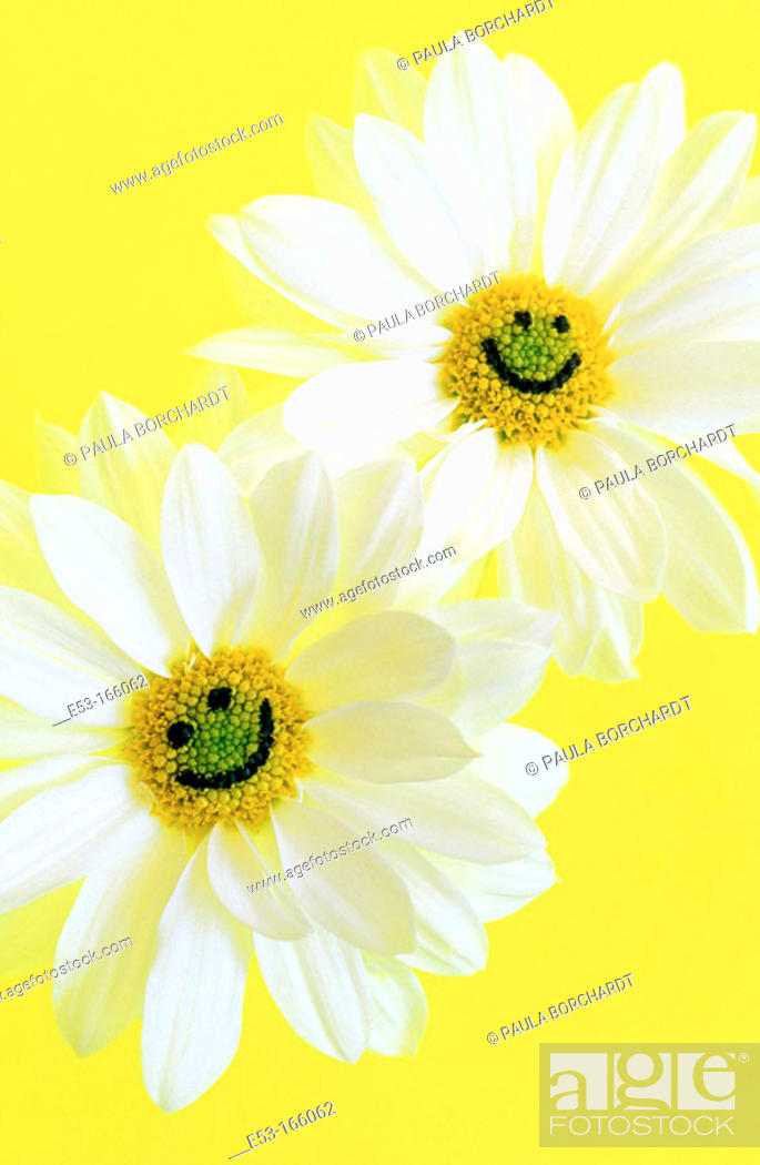 Stock Photo: Two daisies with smiley faces.