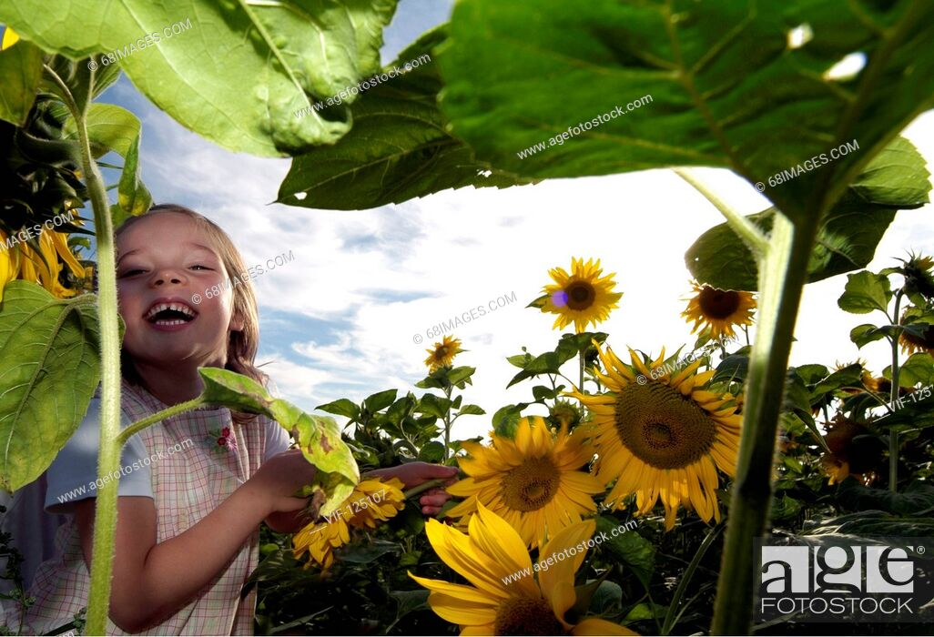 Stock Photo: Sommer - kleines Maedchen spielt und tobt im Sonnenblumenfeld - Hamburg, GERMANY, 01/01/2005.