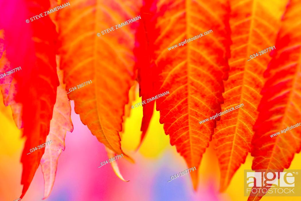 Stock Photo: Color Cluster.