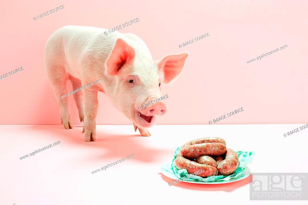 Stock Photo: Piglet looking at plate of sausages in studio.