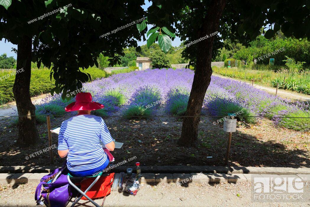 Stock Photo: An artist paints the lavender in the garden at Maison de Sante Saint Paul Monastery at Saint Remy.