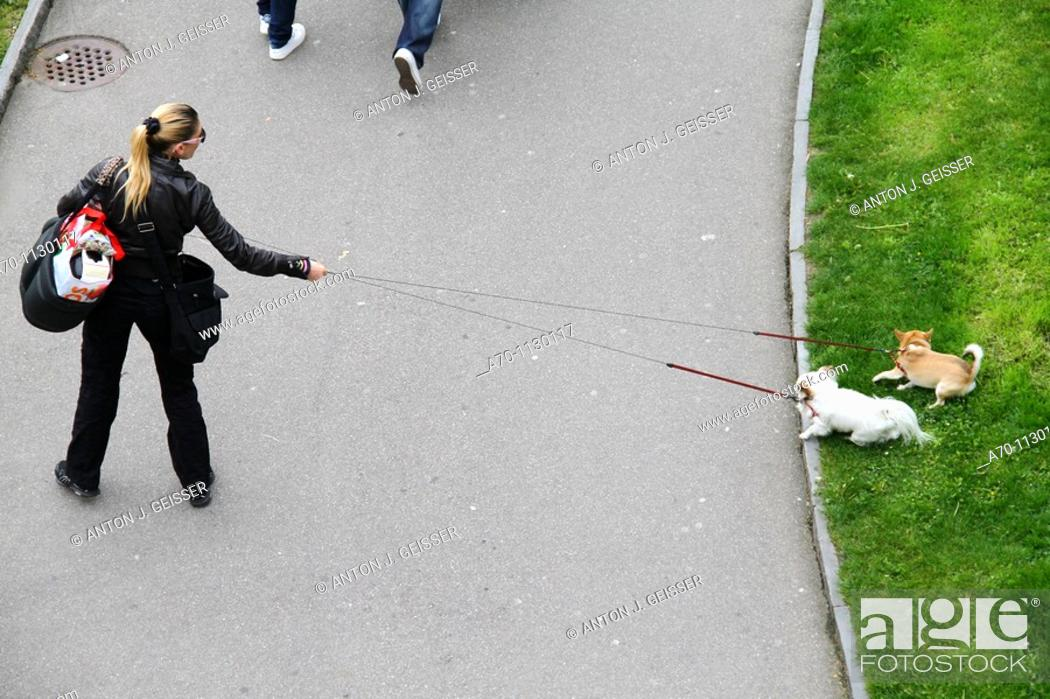 Stock Photo: Woman with dogs at the line , zurich , switzerland.