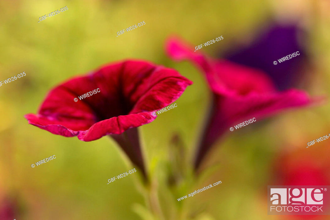 Stock Photo: Flowers, nature.