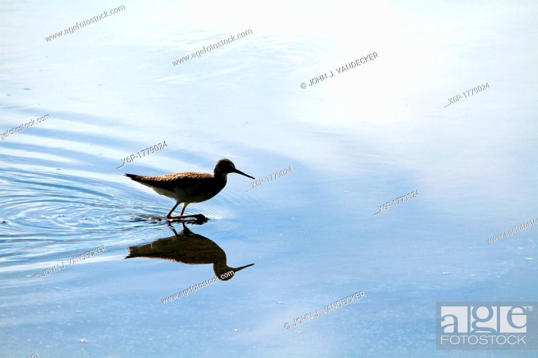 Stock Photo: A sandpiper in partial silhouette walking through a saltmarsh  Richard DeKorte Park, Lyndhurst, New Jersey, USA.