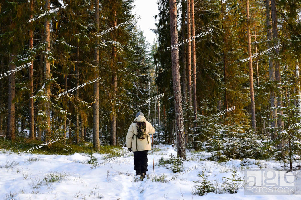 Stock Photo: A man is walking through a snowy winter forest.