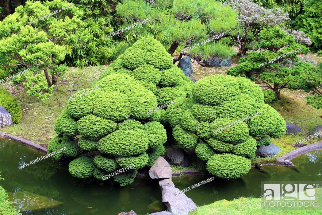 Stock Photo: Looking down on a landscaped Japanese garden with a pond, bamboo, evergreens and sculpted shrubs in California, USA.