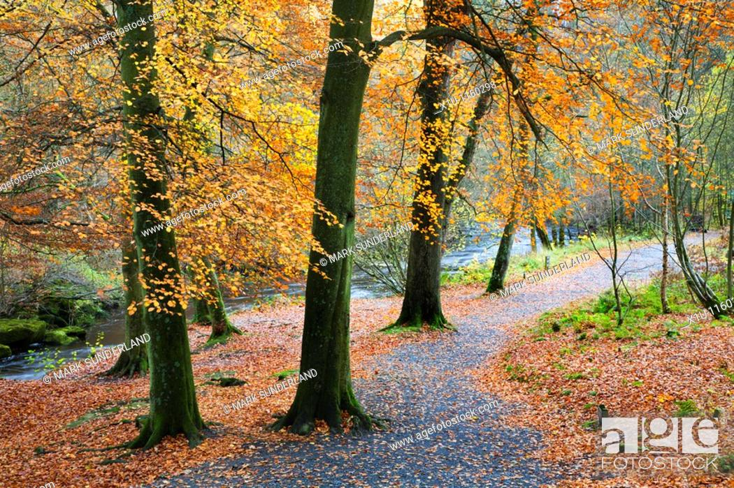 Stock Photo: Path by the River Wharfe Strid Wood Wharfedale Yorkshire England.