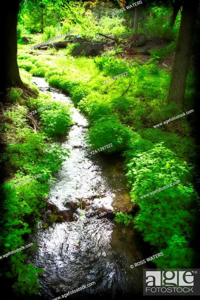 Stock Photo: A creek in the Finch Arboretum, Spokane, Washington, USA.