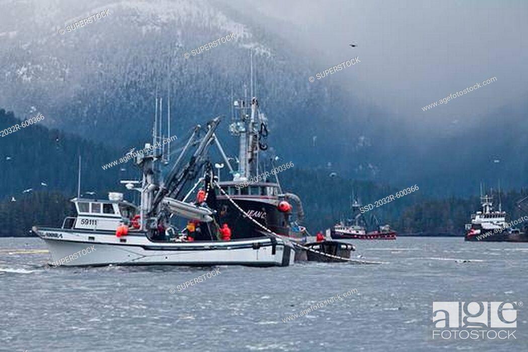 Imagen: USA, Alaska, Sitka, Seining for herring.