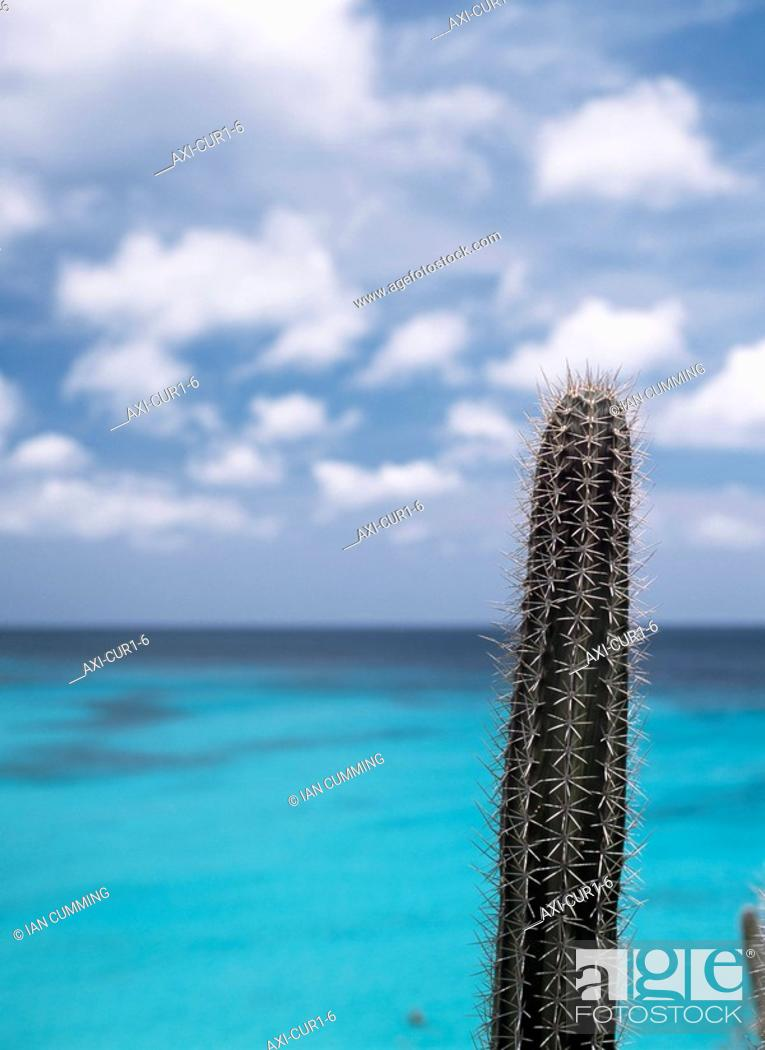 Cactus Beside Knip Beach Stock Photo Picture And Rights Managed