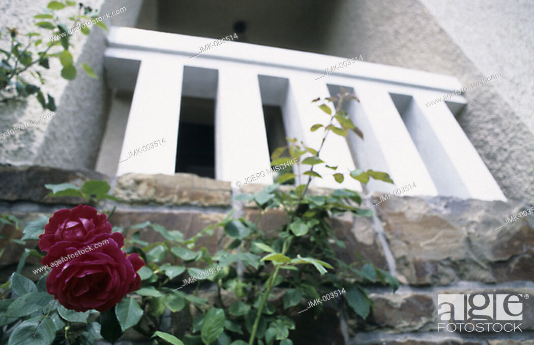 Stock Photo: A red rose in the garden in front of a house.