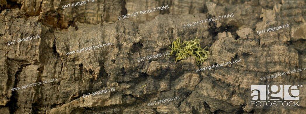 Stock Photo: Wood - Tree Bark.