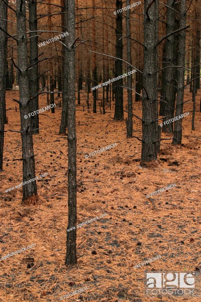 Stock Photo: outdoors, natural, environment, condition, trees, forest.