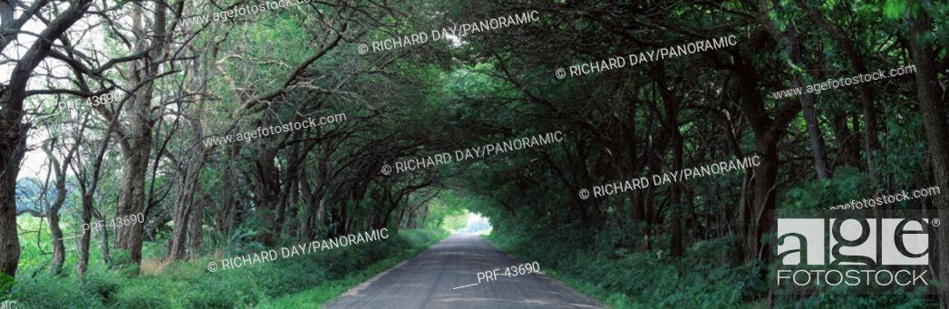 Stock Photo: Road through trees Marion Co IL USA.