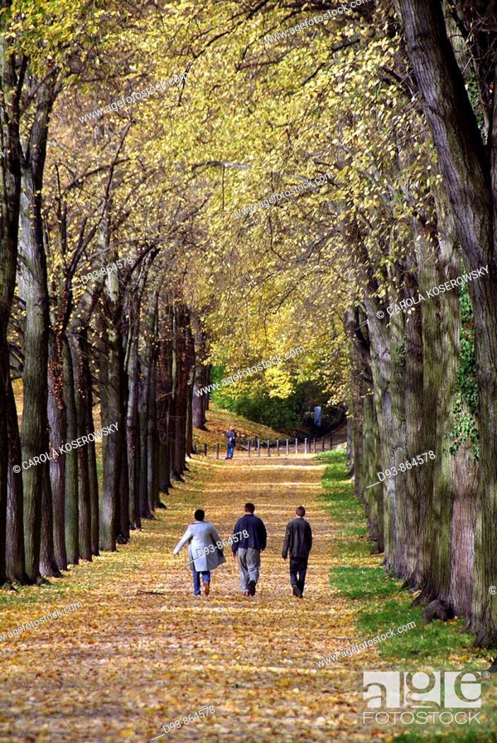 Stock Photo: D, Germany, Brandenburg, Potsdam, Nature, Autumn, fall, forest, park, alley,.
