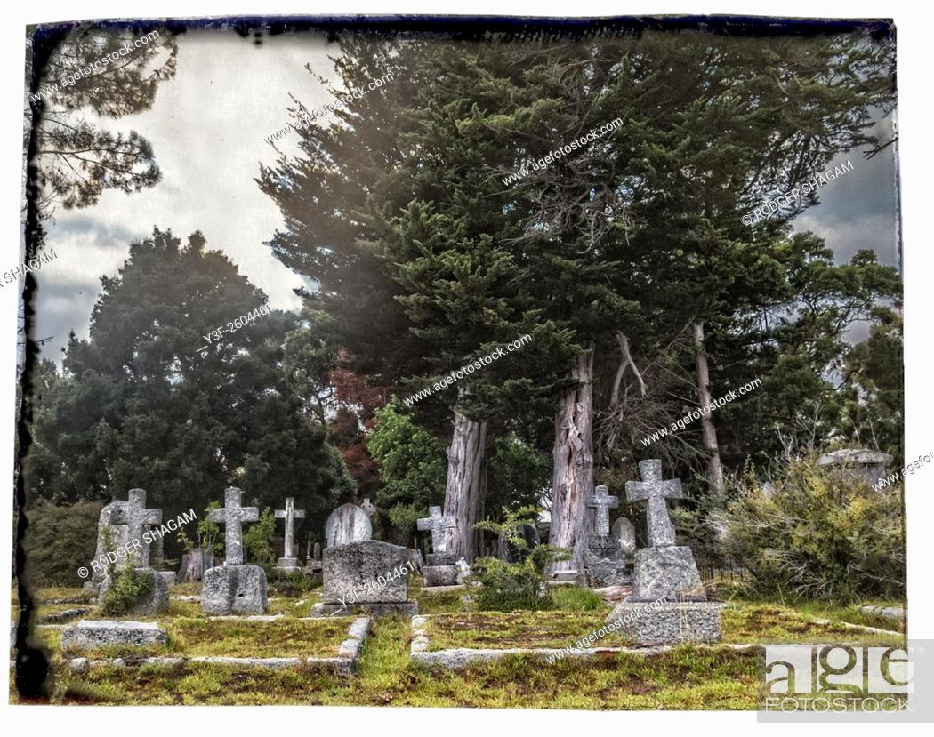 Stock Photo: Cemetery under pine trees. With border. Constantia, Cape Town, South Africa.