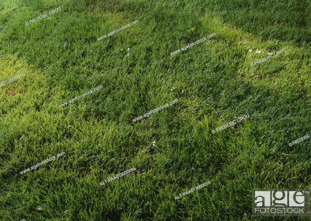 Stock Photo: Grass, close-up, full frame.