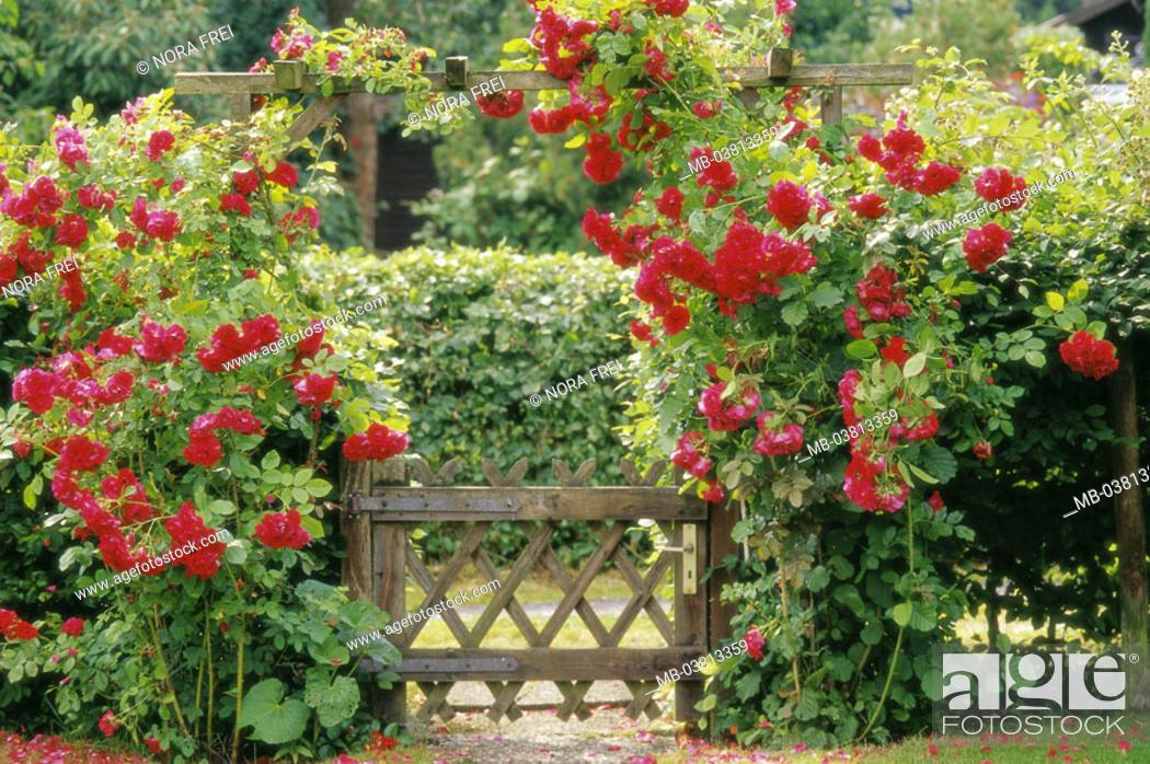 Garden Gate Rose Bow Climbing Roses Summer Entrance Garden