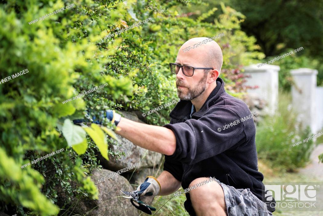Stock Photo: Man cutting plants in garden.