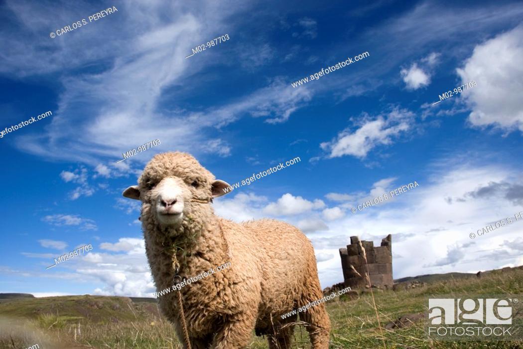 Stock Photo: Tumbs called Chupllas in Sillustani, Puno, Peru, South America.