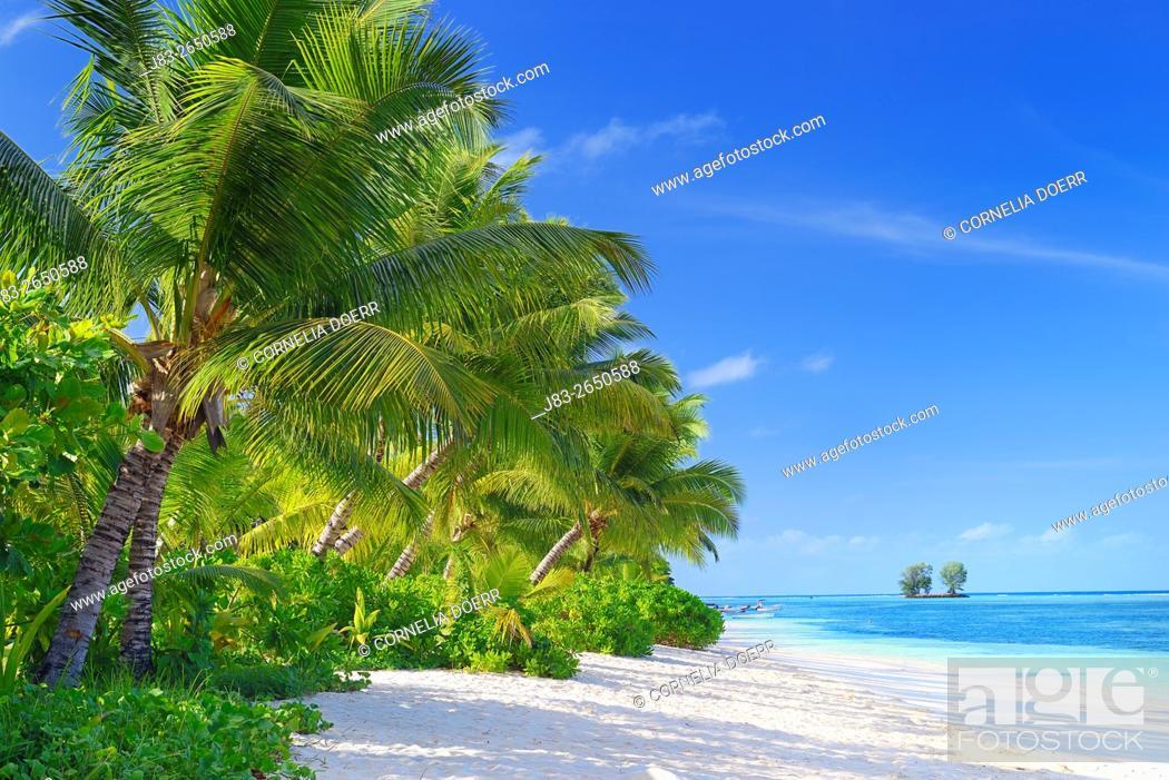 Stock Photo: Tropical paradise, La Digue Island, Seychelles, Indian Ocean, Africa.