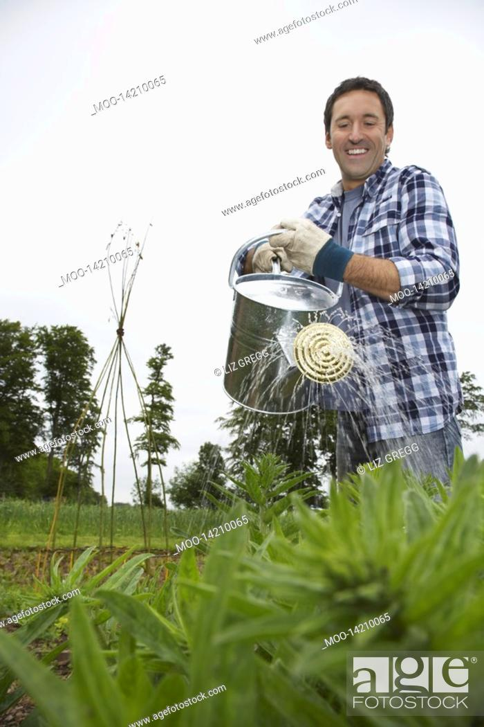 Stock Photo: Man watering crops in field.