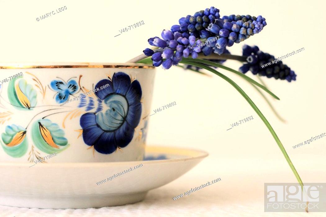 Stock Photo: Half cut view a couple stems of grape hyacinth curve over the rim of a white procelain cup with blue floral motif grape hyacinth droops in a blue porcelain tea.