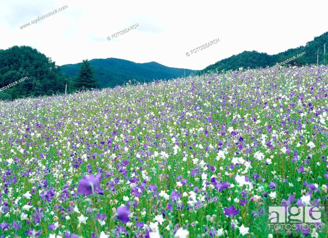 Stock Photo: flower, scenery, plant, nature, mountain, film.