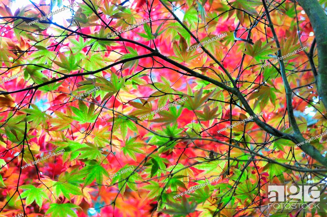 Stock Photo: USA, Washington State, Seattle, Autumn leaves on tree.