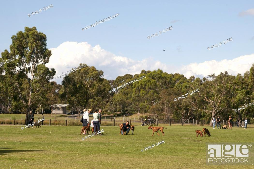 Stock Photo: Late afternoon dog walking at Elsternwick Park in the SE suburbs of Melbourne, Australia.