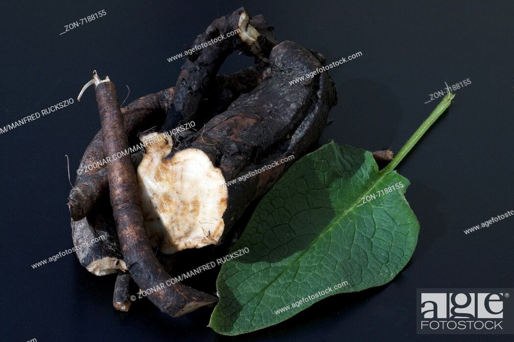 Stock Photo: Beinwellwurzel, Symphytum; officinale.