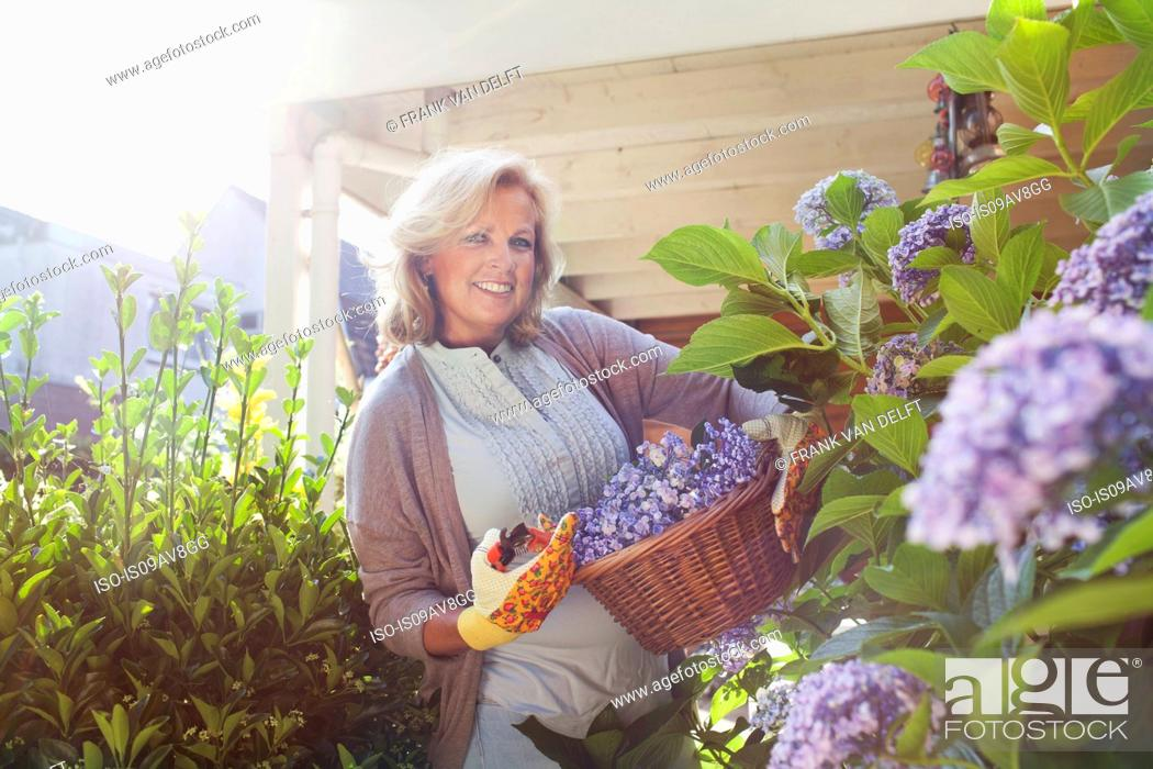 Stock Photo: Portrait of mature woman in garden, holding basket of flowers.