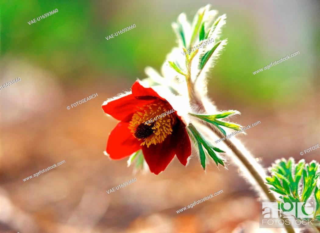 Stock Photo: spring, plant, nature, season, flower, film.